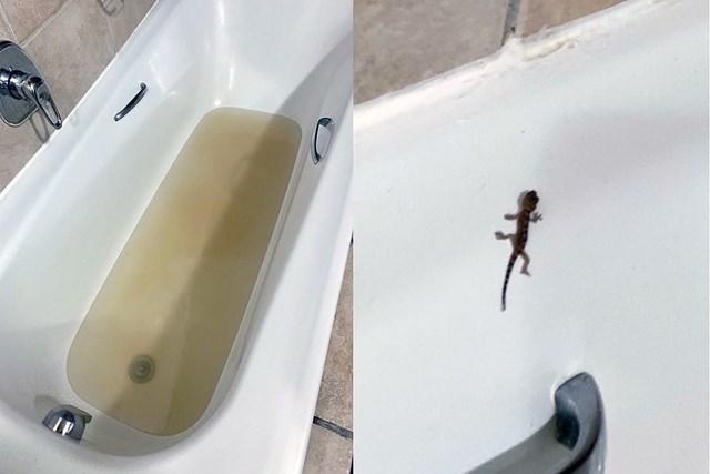 2020年 アルフレッド・ダンヒル選手権 事前 南アフリカのコテージ お風呂の水の色が…蛇口をひねったらトカゲ出ました