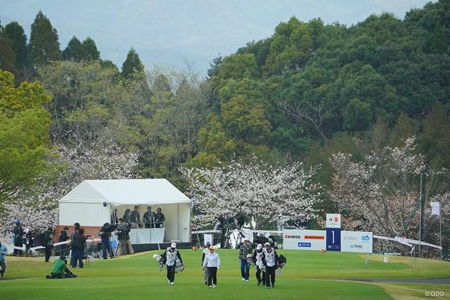 2021年 Tポイント×ENEOSゴルフトーナメント 2日目 1番ティ 桜が綺麗な1番ティ。本当に白いテントだけが残念だなぁ。