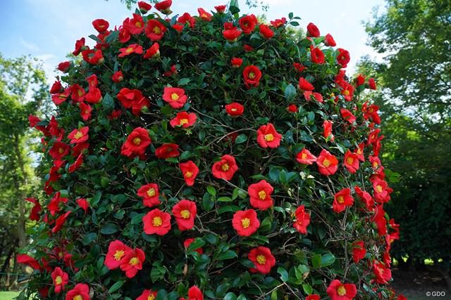 2021年 アース・モンダミンカップ 2日目 花 綺麗な花だなぁと思って近付いたら全て造花。