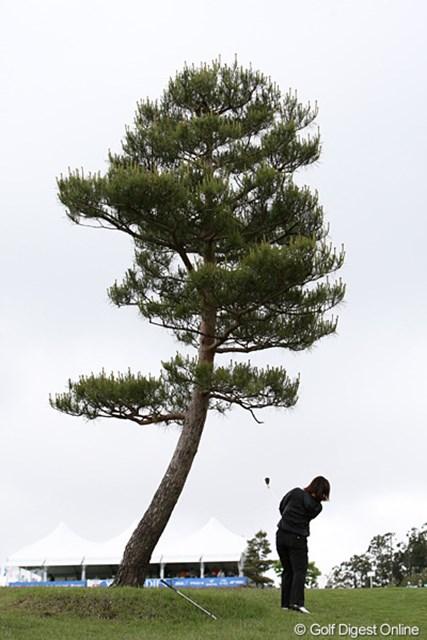 2010年 ヨネックスレディスゴルフトーナメント 初日 最終18番 最終18番は左に曲げるとこの一本の木がスタイミーになる