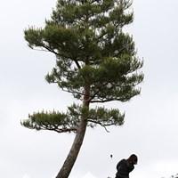 最終18番は左に曲げるとこの一本の木がスタイミーになる 2010年 ヨネックスレディスゴルフトーナメント 初日 最終18番
