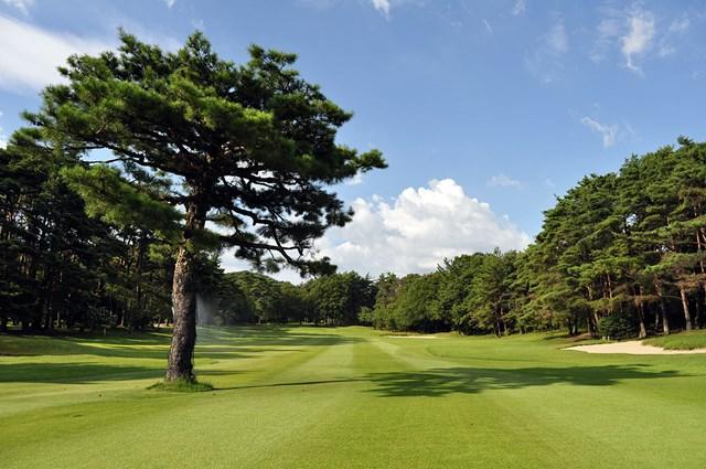 宝塚クラシックゴルフ倶楽部 美しい松林がコースに彩りを加える(画像提供:宝塚クラシックゴルフ倶楽部)