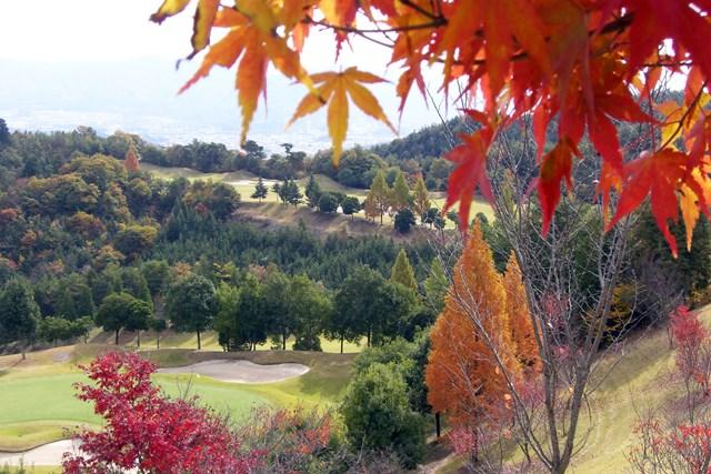明智ゴルフ倶楽部 ひるかわゴルフ場 秋の紅葉は絶景のゴルフ場で味わいたい(画像提供:明智ゴルフ倶楽部 ひるかわゴルフ場)