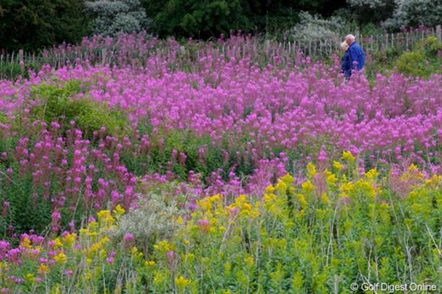 2010年 全英リコー女子オープン2日目 花畑 雨の日でも、色鮮やかな風景が広がってます
