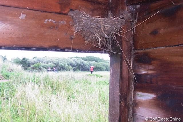2010年 全英リコー女子オープン2日目 ツバメの巣 雨宿りに入った小屋の軒にツバメの巣がありました