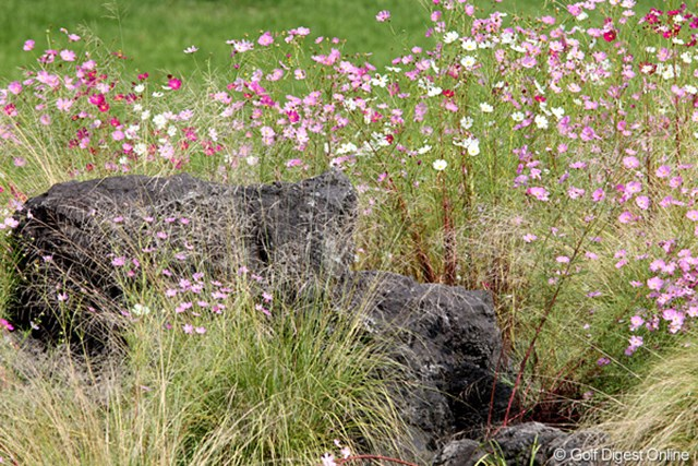 コースにコスモスの花が咲いていて秋を感じます。