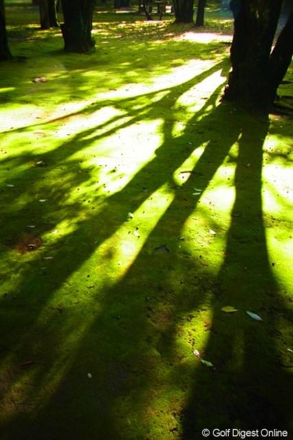 2010年 LPGAツアーチャンピオンシップリコーカップ事前情報 苔 色と光と影。トイカメラモードでの撮影はそれぞれがより鮮明さを増す(撮影:リコー CX4/今岡涼太)