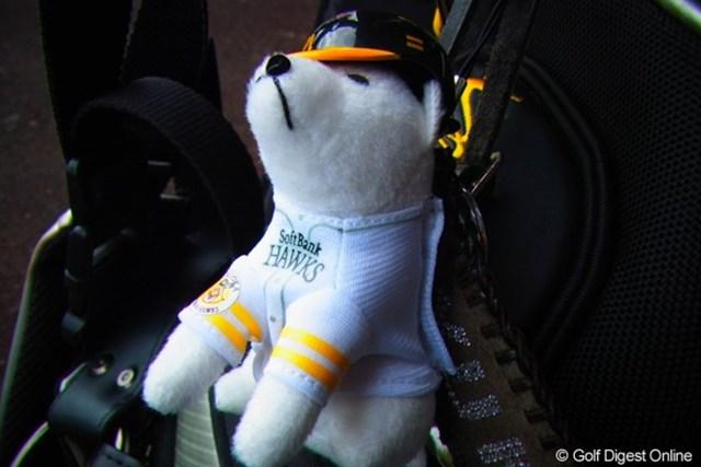 2010年 LPGAツアーチャンピオンシップリコーカップ事前情報 ソフトバンク犬 馬場プロのキャディバッグにはソフトバンクのお父さん犬が。「ソフトバンクファンではないんですが、色がバッグに合っているので…」と馬場(撮影:リコー CX4/今岡涼太)