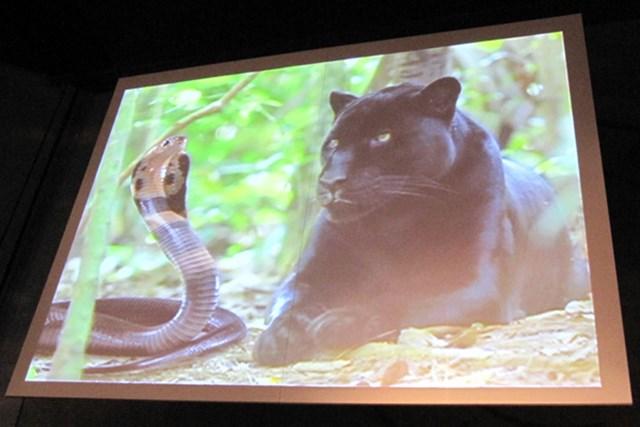 コブラ買収の経緯を話す前にスクリーンに映し出された「コブラ(蛇)とプーマ(豹)」