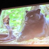 コブラ買収の経緯を話す前にスクリーンに映し出された「コブラ(蛇)とプーマ(豹)」 「全てのゴルファーに魅力ある商品を」コブラ・プーマが新製品を発表 NO.8