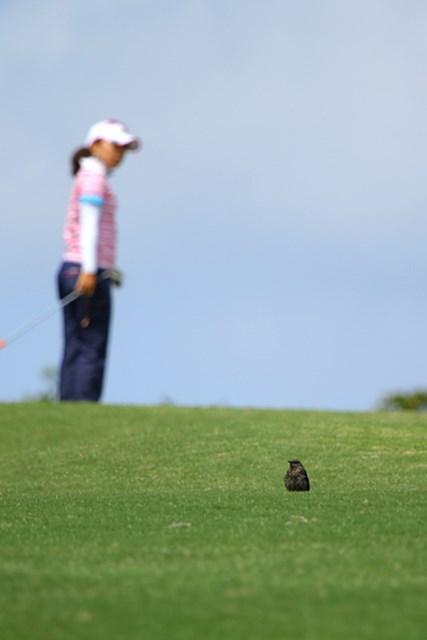 2011年 ダイキンオーキッドレディスゴルフトーナメント 初日 佇む鳥 戦う選手たちを尻目に、のんびり日向ぼっこ?