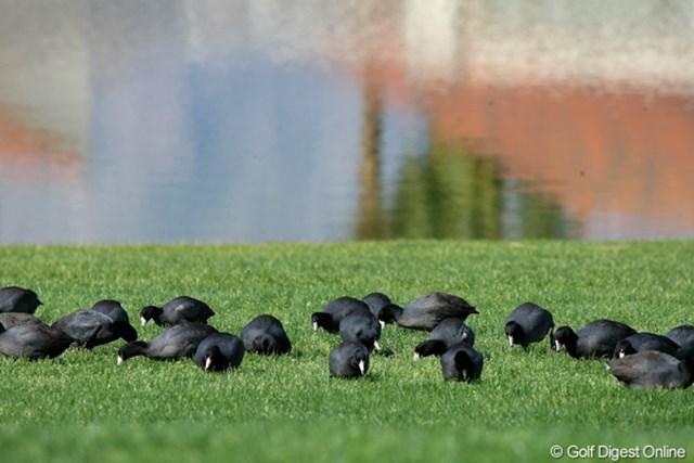 鳥 2011年クラフトナビスコチャンピオンシップ コース内では様々な鳥たちが羽を休めている