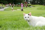 2011年 エビアンマスターズ 3日目 猫