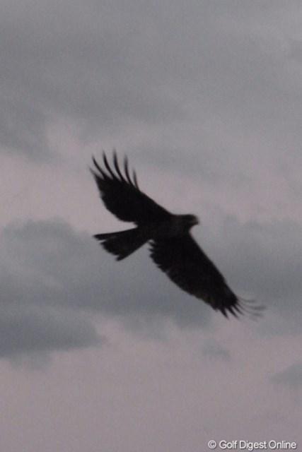 2011年 LPGAツアーチャンピオンシップリコーカップ 事前 鳶 青島漁港の上空を飛び回る鳶。撮影には被写体追尾オートフォーカスを使ってみました(撮影:リコー CX5)