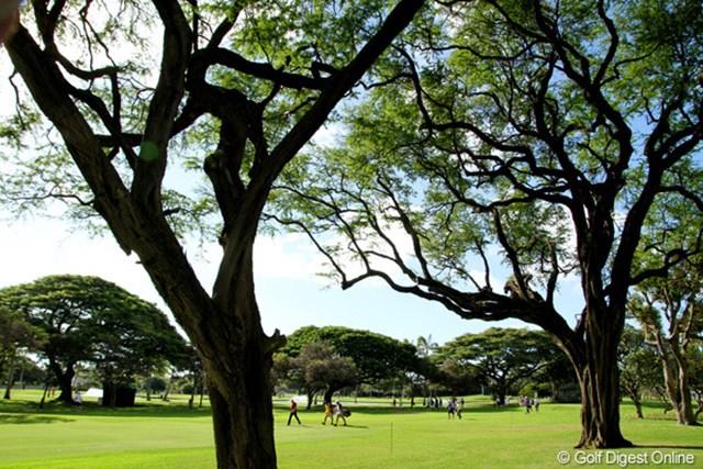 ハワイといえばヤシの木のイメージだが、大きな落葉樹がショットを阻んでいる