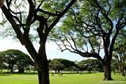 2012年 ソニーオープンinハワイ 2日目 木々