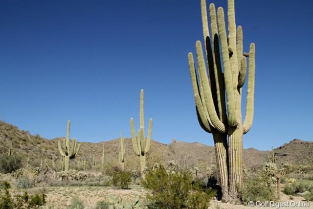巨大なものは10mを越える高さまで成長する。毎年見ているが、見飽きない風景です