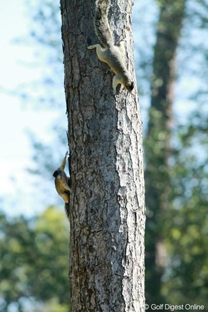 選手たちが真剣にショットを打つ横の木で、リスが2匹鬼ごっこ。まるで忍者です