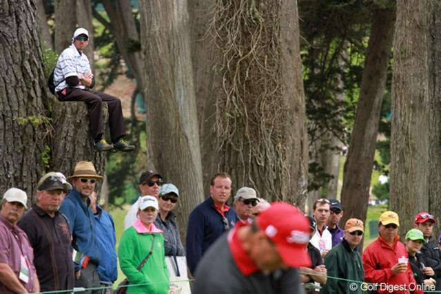 2012年 全米オープン 最終日 特等席 木の枝を切り落とした跡に腰掛けて、悠然と観戦。どうやってそこに上ったの?
