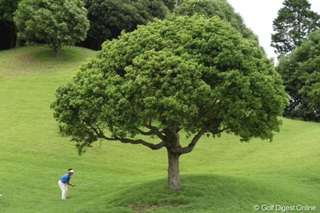 ちょっとこの木、誰かどけてくれないかなぁ。