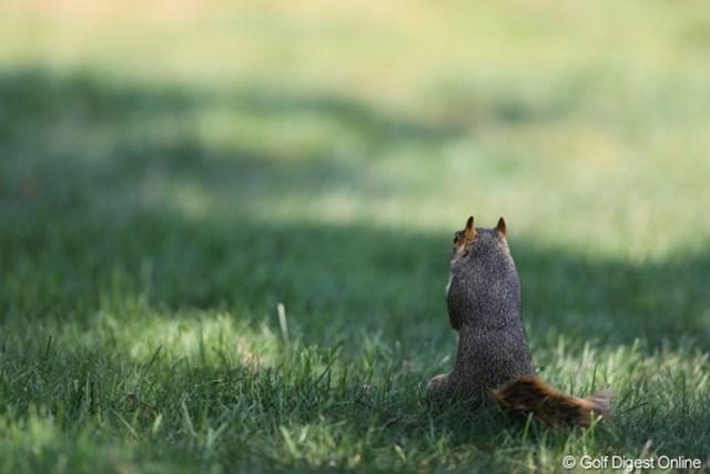 2012年 WGCブリヂストンインビテーショナル 初日 リス 後ろから見ても眼球が見えるってことは・・・こっちも見えてるって事?
