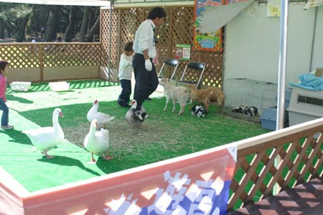 こちらは移動動物園。アヒルやウサギなど、小さい子供でも触れるような動物が勢ぞろい。