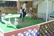 2002年 ダンロップフェニックストーナメント 最終日 移動動物園