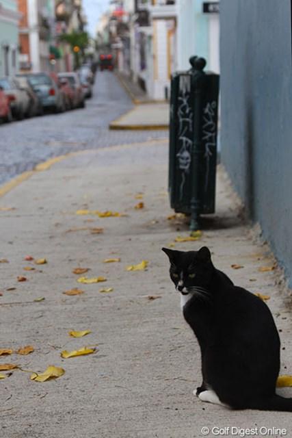 オールドサンファン/プエルトリコ 石畳の街路に、古い建物と新しいおしゃれな店が混在する