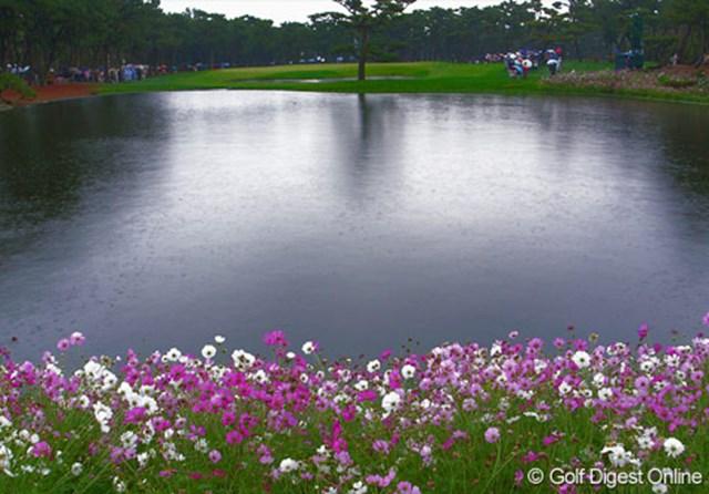 2006年 ダンロップフェニックストーナメント  17番パー3、池の周囲の花をリコーのGR DIGITALで撮影