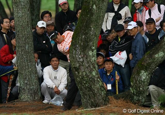 2006年 ダンロップフェニックストーナメント パドレイグ・ハリントン プレーオフ2ホール目、ティショットを林に入れたハリントンだが、二股に分かれた木の間を抜いてバーディにつなげた