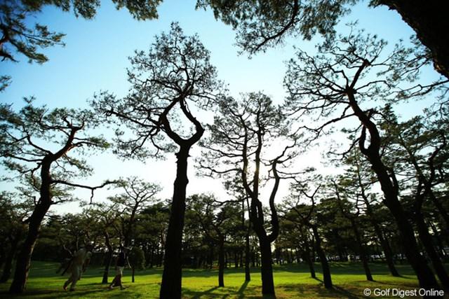 9番ホール右サイドの松林を抜け出すのは至難の業です。