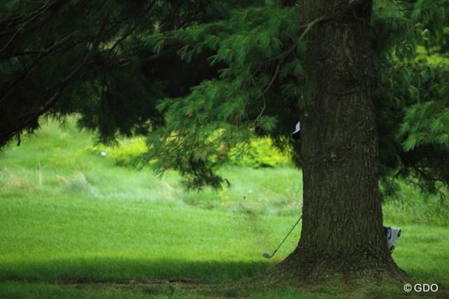 どなたか木の後ろから横に出しておりますが、本日61の虎様です。