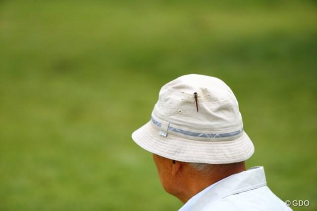 2013年 日本オープンゴルフ選手権競技 3日目 ギャラリー これトンボだからほのぼのしてるけど、ゴキブリだったらタダ事じゃないね。