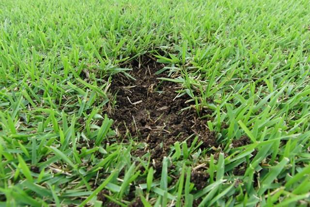 芝を深くとってしまうと飛距離が出ない。打ち方とクラブ選択に注意すること