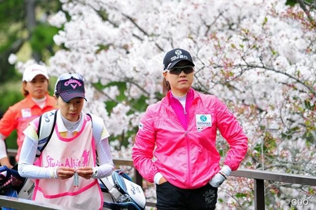 満開の桜を背に、サタヤを従えて闊歩しております。この頃トップはサタヤでしたけど「気持ちは負けヘンで~」ということでしょうか?