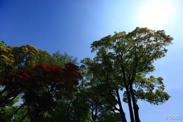 2014年 中日クラウンズ 最終日 林 初日から最終日まで好天に恵まれた。