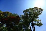 2014年 中日クラウンズ 最終日 林