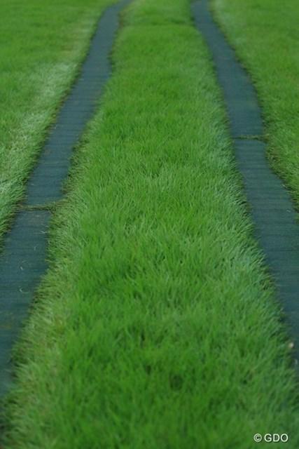 マスターズを真似て、緑色以外は許しませんっ!カート道路もすべて緑色に塗っちゃいました。
