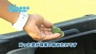 GDOTV Vol.10「グリーンキーパーの仕事に密着(後編)」「カートでの会話」